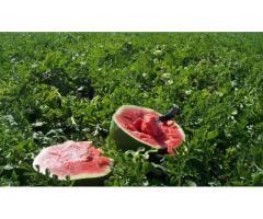 Douze (12) Hectares favorable à la culture de pastèque et des céréales