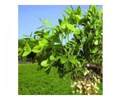 Cinquante (50) Hectares à Djidja favorable à la culture de pastèque et des céréales