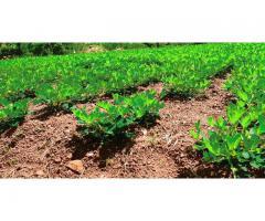 Quatre-vingt (80) Hectares favorable à la culture de pastèque et des céréales