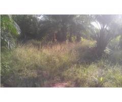 A vendre deux parcelles ensemble de 500 m2 chacune située à ouidah