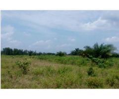 Un domaine morcelé de 500m² est mise en vente a ZINVIÉ commune d'Abomey calavi