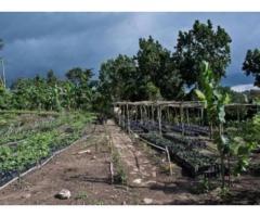 200 hectares non loin de la grande voie Allada - Avakpa
