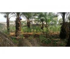 À VENDRE À CALAVI quatre parcelles ensemble et clôturées avec titre foncier