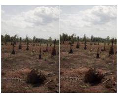A vendre.. Un hectare a vendre au bord du goudron a ouègbo