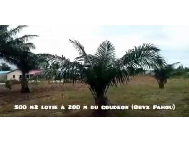 parcelle à Pahou à seulement 200 mètres du goudron et du commissariat de police